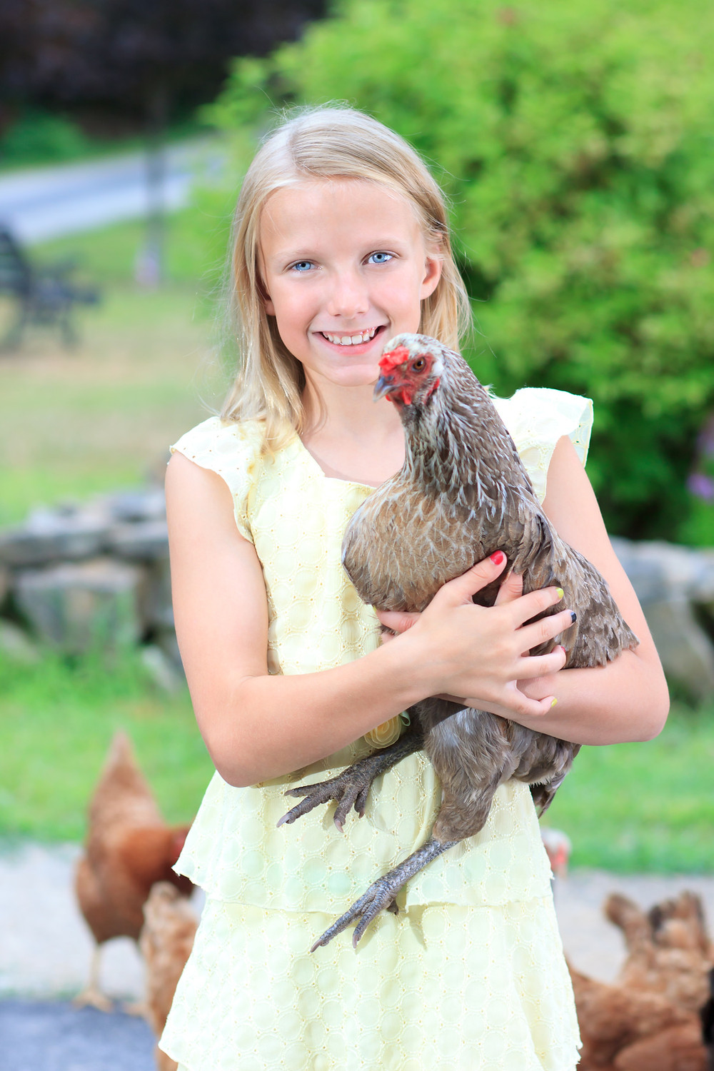 Adopting chickens is a fantastic idea for older children!