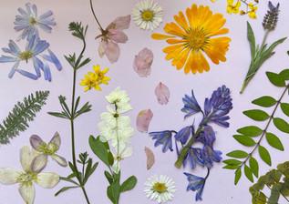 Flowers | YVERT