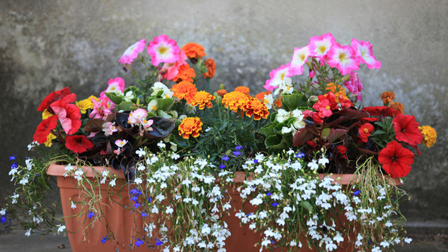 Flowers at the Entrance