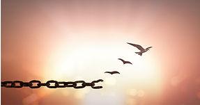 chaines_oiseauxPC.jpg