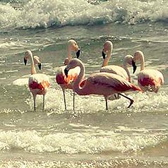 Fauna Playas Doradas