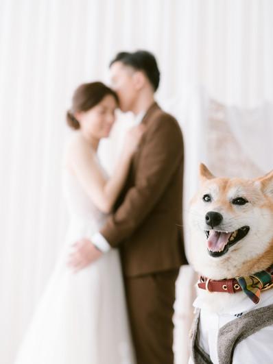 自助婚紗推薦分享|永遠看不膩的婚紗|LINN美式婚紗婚禮攝影|光復新村|寵物婚紗
