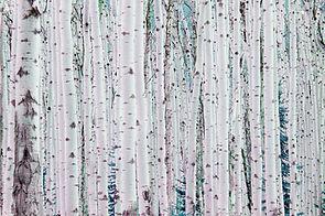 Serenity Now Birch Trees