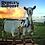 Thumbnail: レベルズ ルースト 農場&養蜂場