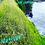 Thumbnail: Vetiver Farms Hawaii