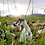 Thumbnail: Sweet Land Farm