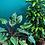 Thumbnail: Plantoem