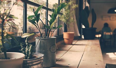 Planten op het Venster