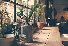 Planter på vinduet