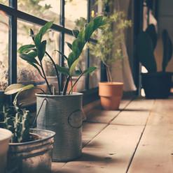 Plantas en la ventana