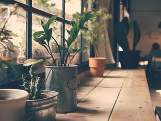 Purifying plants for your home