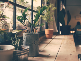 Bring the Outdoors Indoors: The Many Benefits of House Plants