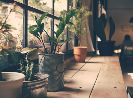 The Best Houseplants for Any Home – and How to Care for Them