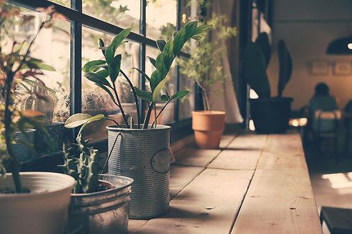 Pflanzen auf dem Fenster
