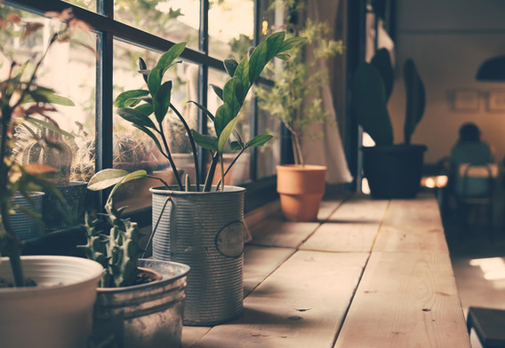 Le piante sulla finestra