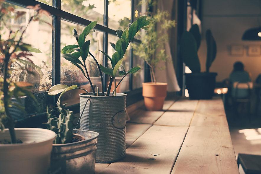 ウィンドウの上の植物
