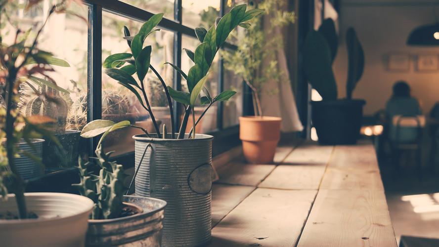 Plantes sur la fenêtre