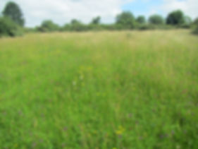 Species Rich Grassland.JPG