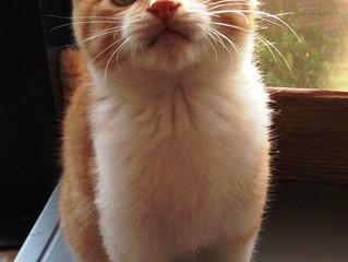 子猫の里親さん、無事にみつかりました。