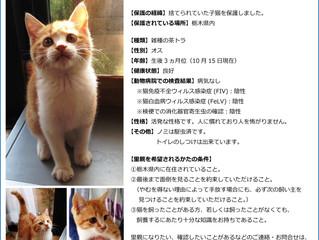 [犬猫よろづ掲示板・犬猫庵]で、子猫の里親を探しています。