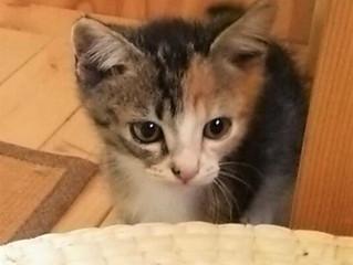 熱中症の話、里親募集中の子猫のこと