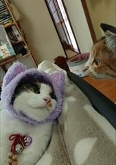 当店の猫スタッフの関係は...