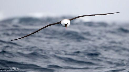 Albatross-Photos.jpg
