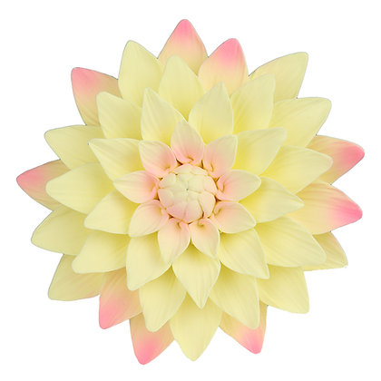 O'Creme Yellow and Pink Dahlia Gumpaste Flowers - Set of 3