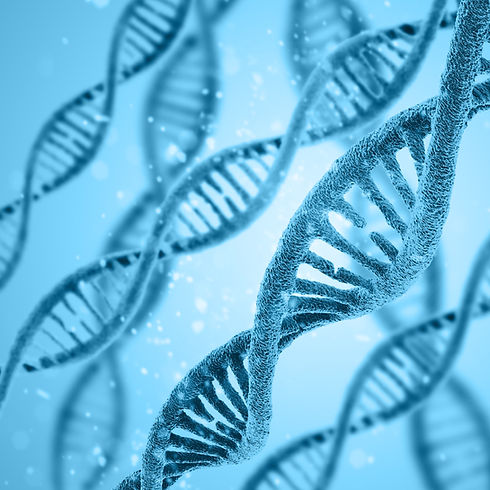 ДНК РНК.jpg