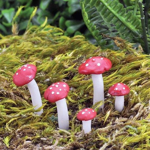Fiddlehead Fly Algaric Mushrooms