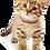 Thumbnail: HK DESIGN - Personalized Animal Key-chain 訂製寵物匙扣 (1 piece)