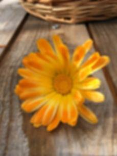 flower-3792474_1920.jpg
