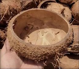 Coque noix de coco sans Coprah, avant d'être poncé
