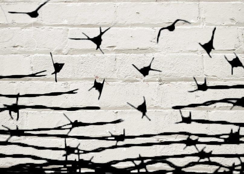 birdwall.jpg