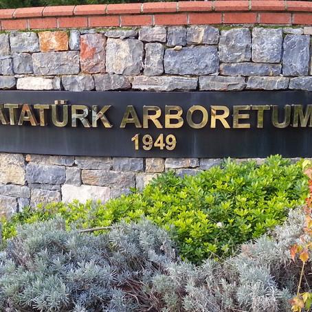 İçinize Doğaya Dokunma Hissi Verecek: Atatürk Arboretumu