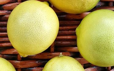 Tarım zehirsiz meyve ve sebze
