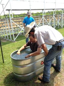 Water trough baptism