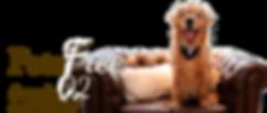 Março Pet Free Hotel Refugio da Montanha em Gramado