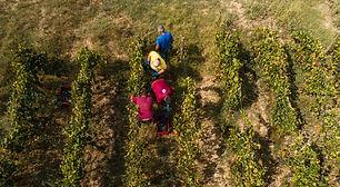 viticoltori-01.jpg