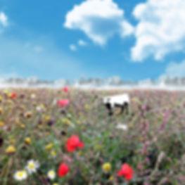 wild flowers - Copy.jpg