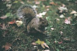 Squirrel's addiction
