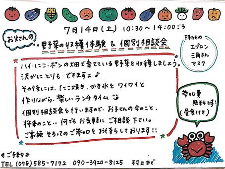 野菜の収穫体験!