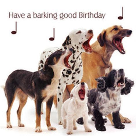 Dog Song Birthday Card