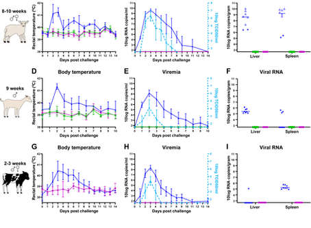 Safety and efficacy of four-segmented Rift Valley fever virus in young sheep, goats and cattle