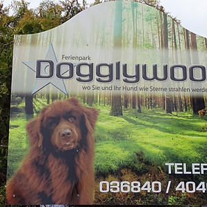 Dogglywood