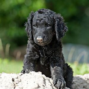 Bennie as a pup