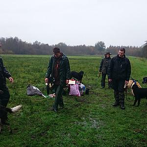 Jachthonden training de Utrechtse
