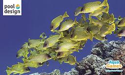 Puzzle Rechteck Fische 3000x1800mm.jpg