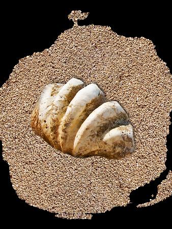 Muschel Sand Adriablau transp.png