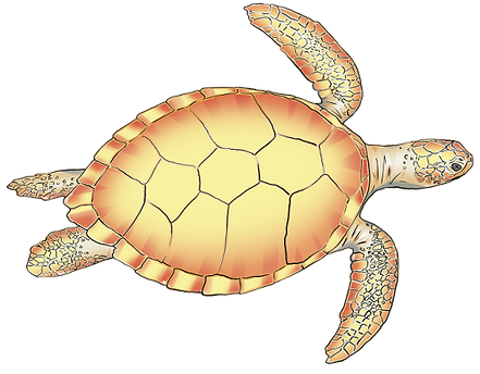 24_Schildkröte_Ocean.png